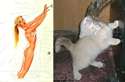 cat pinup girls