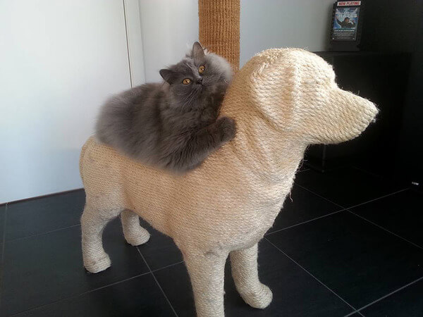 Dog-Shaped Scratching Post 3