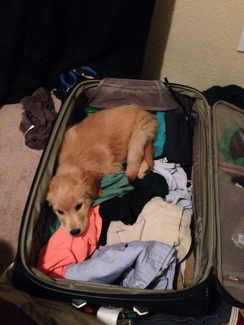 pets sitting in suitcase 11