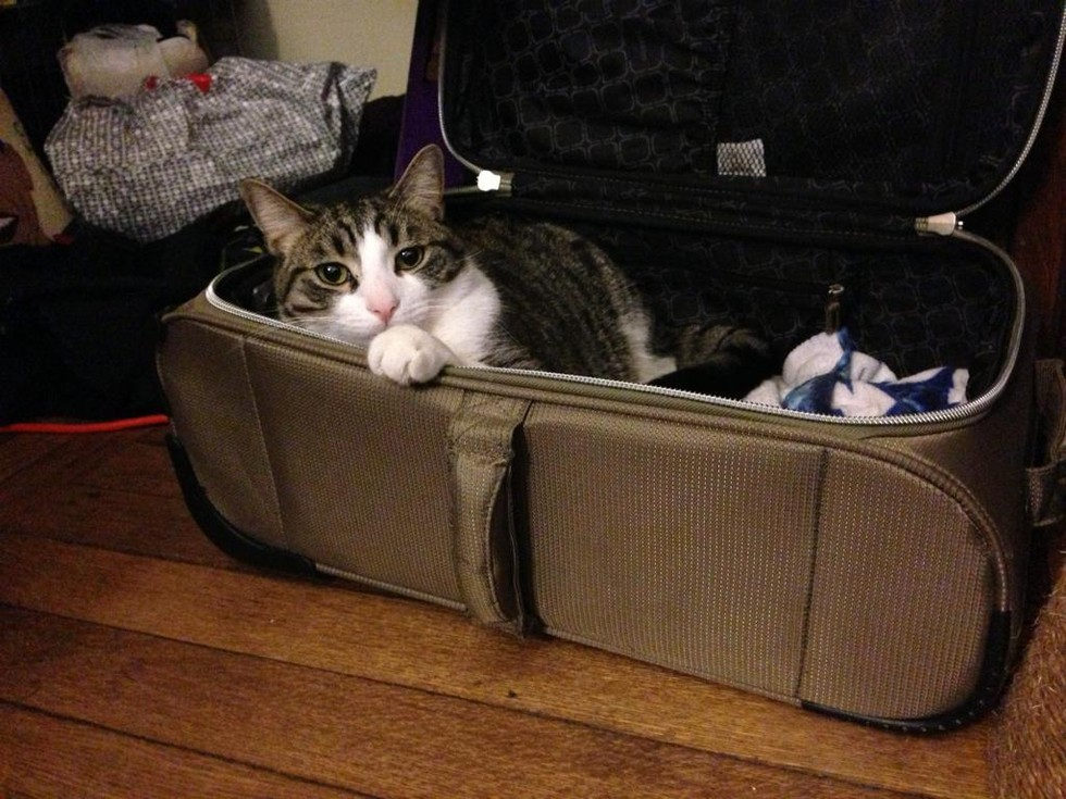 pets sitting in suitcase 12