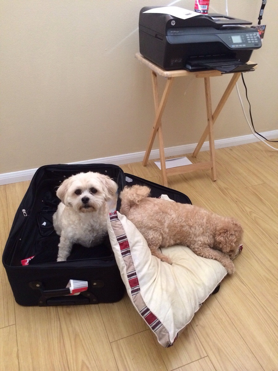 pets sitting in suitcase 13