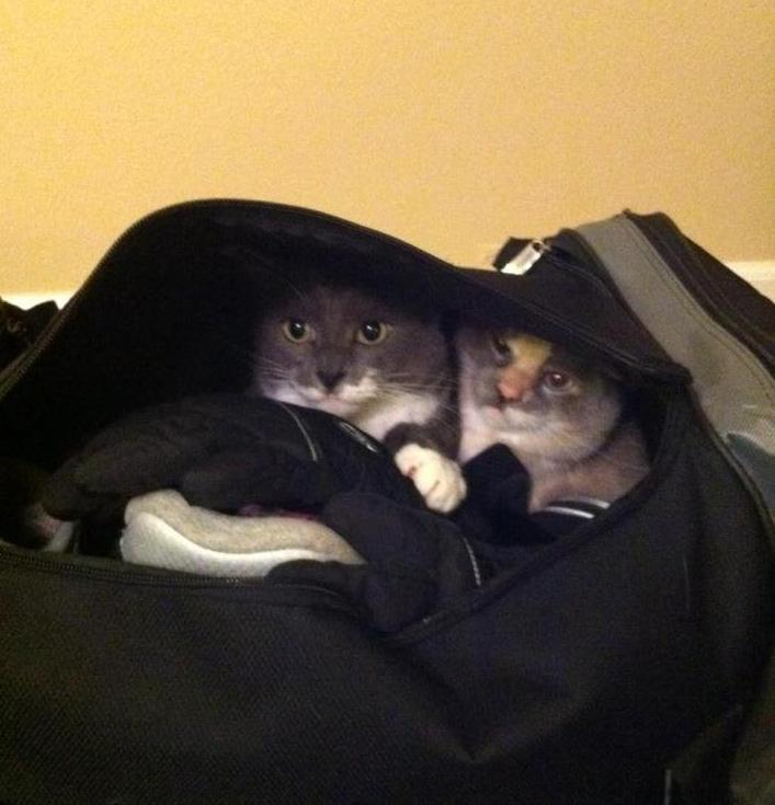pets sitting in suitcase 14