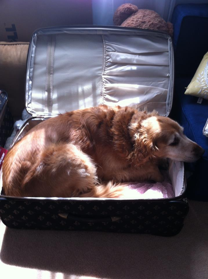 pets sitting in suitcase 15