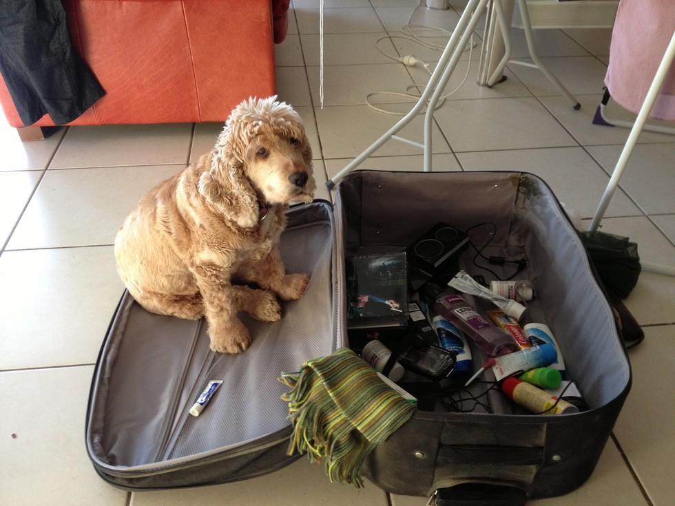 pets sitting in suitcase 17