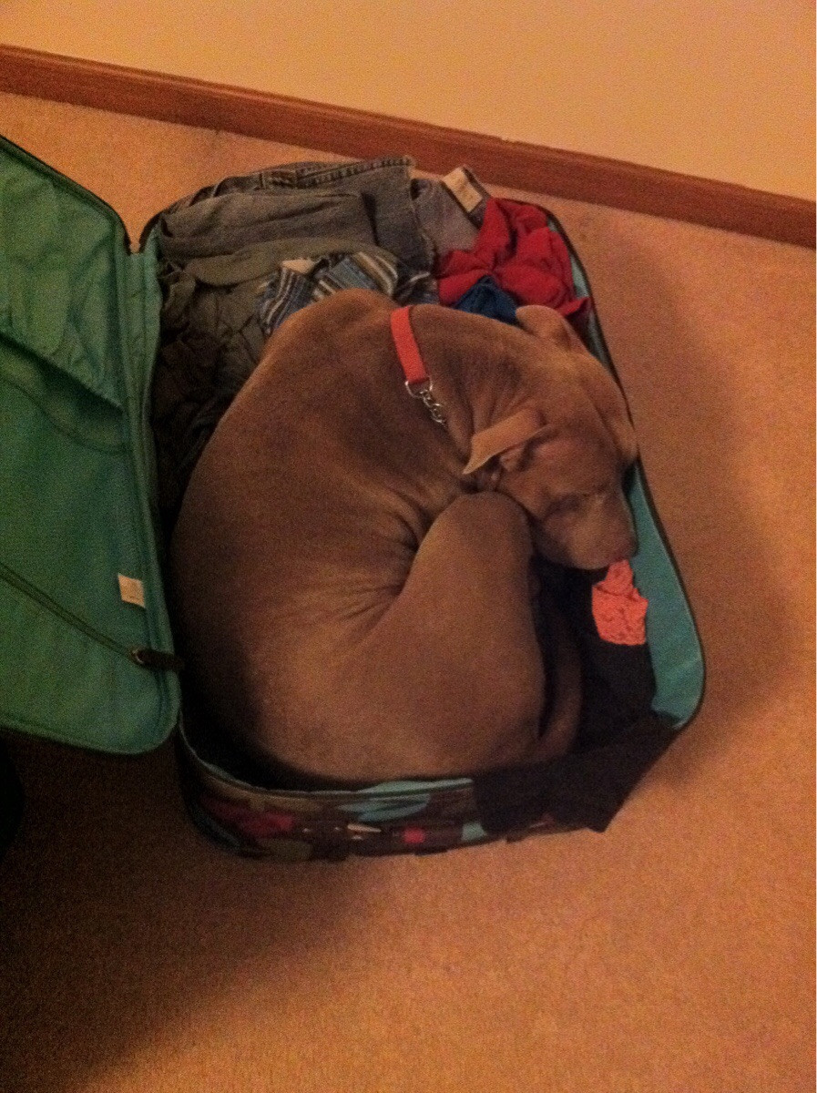 pets sitting in suitcase 3