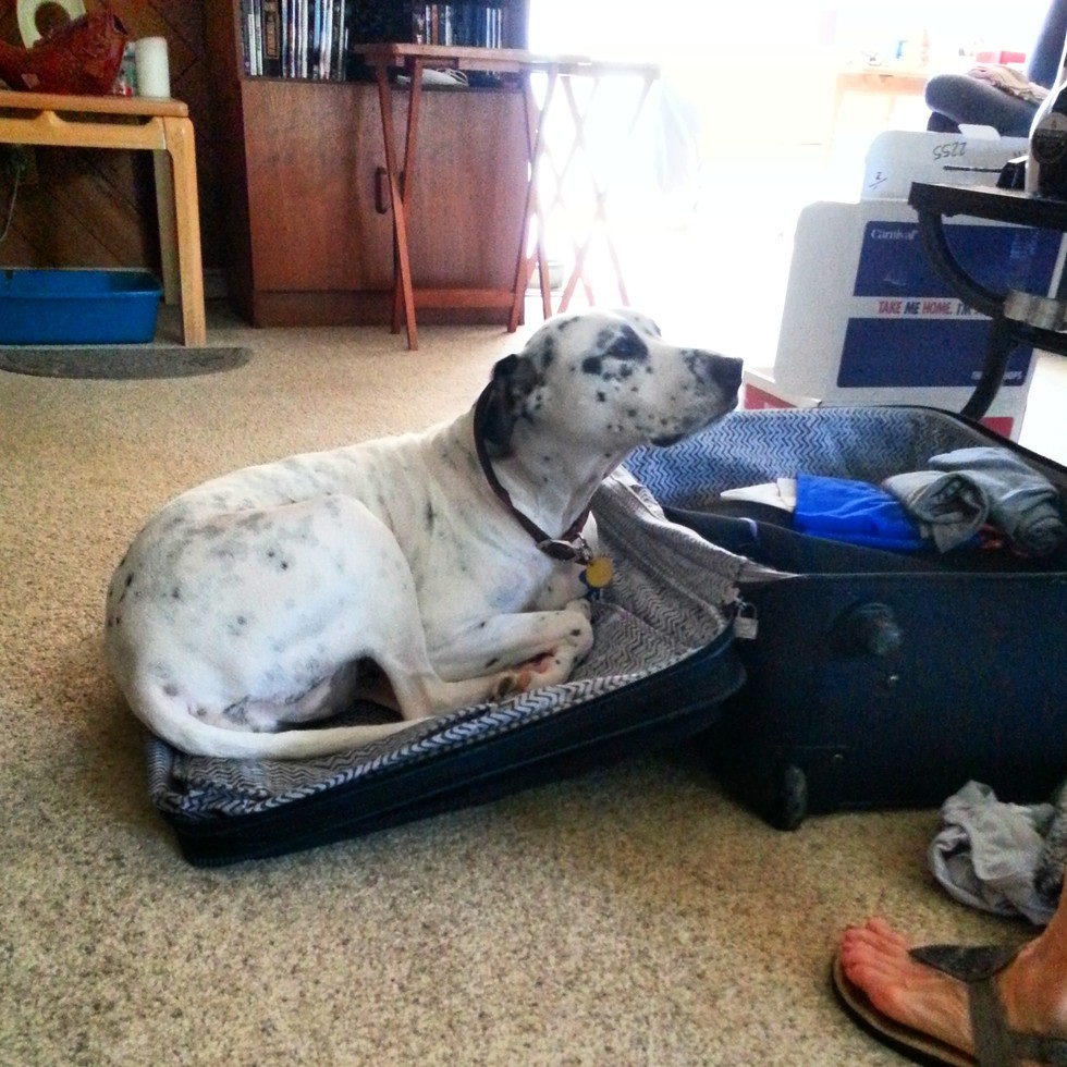 pets sitting in suitcase 5