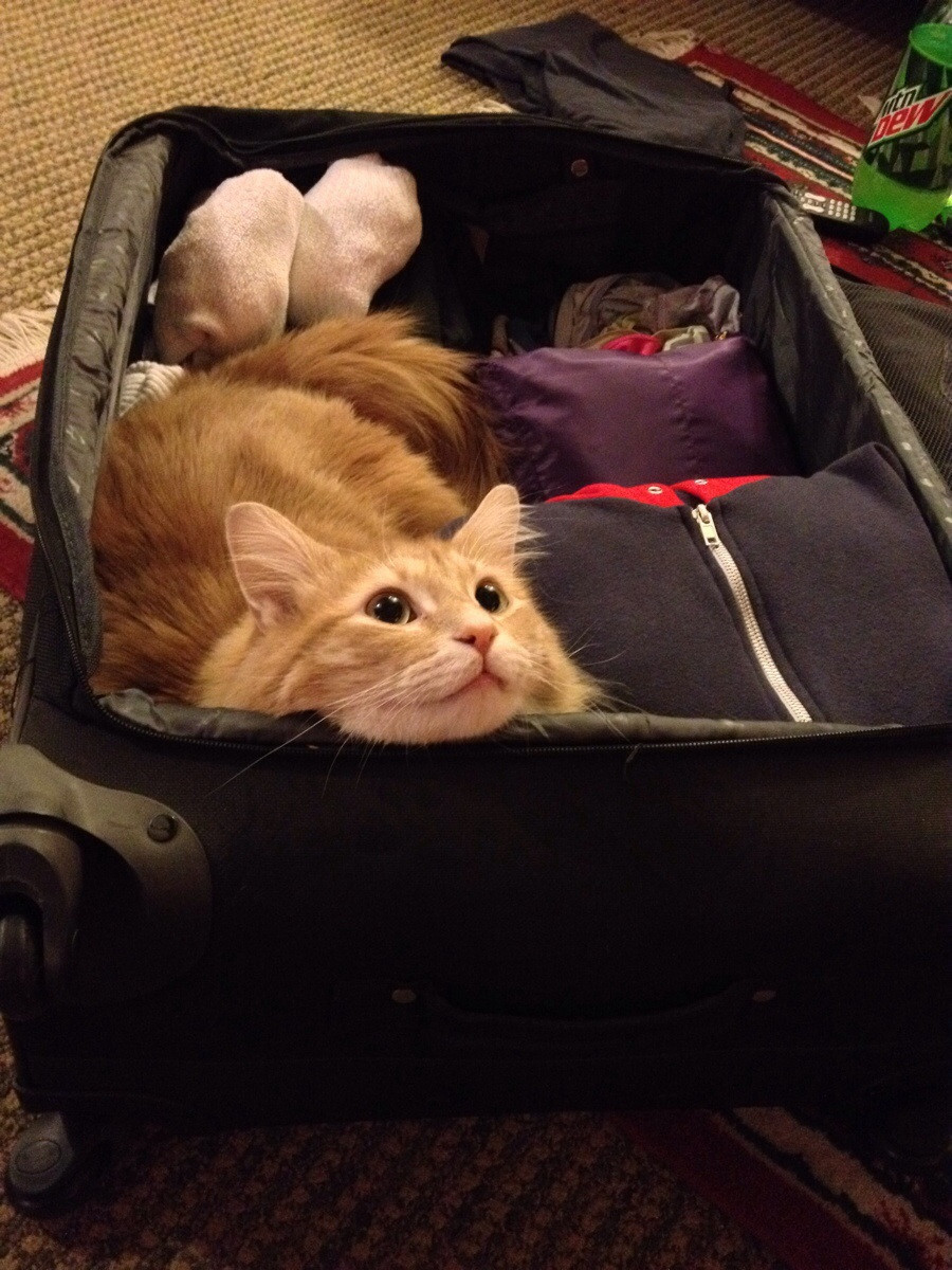 pets sitting in suitcase 6