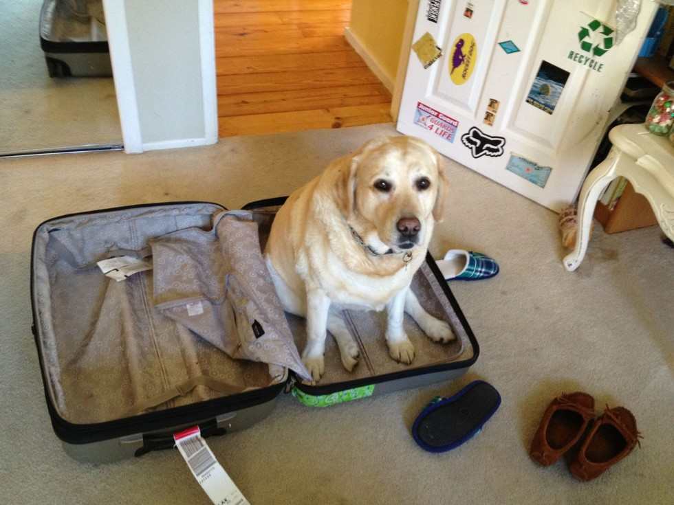 pets sitting in suitcase 7