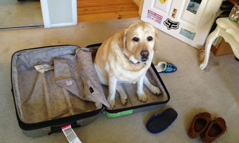 dog-sitting-in-suitcase-7