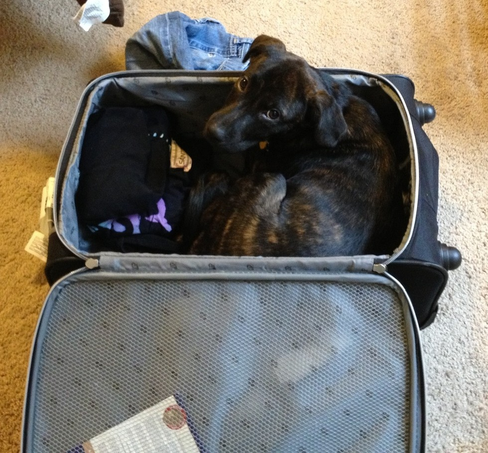 pets sitting in suitcase 9