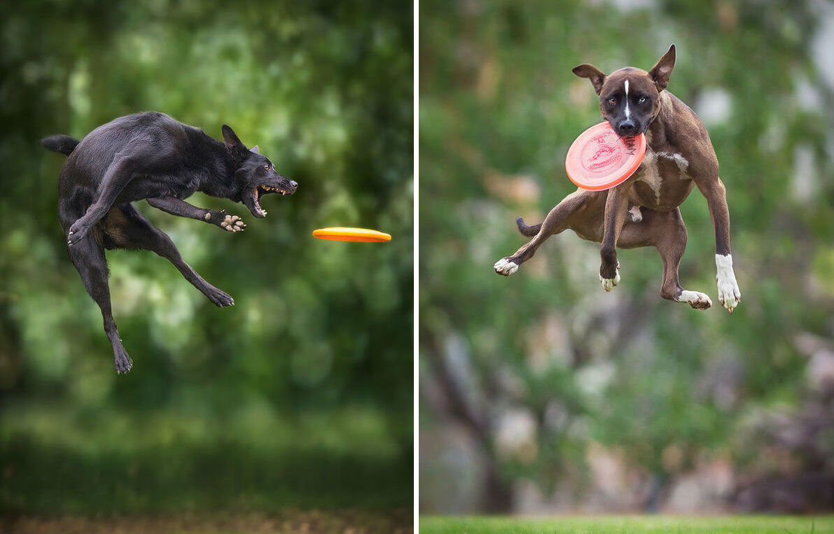 dogs taking flight feat
