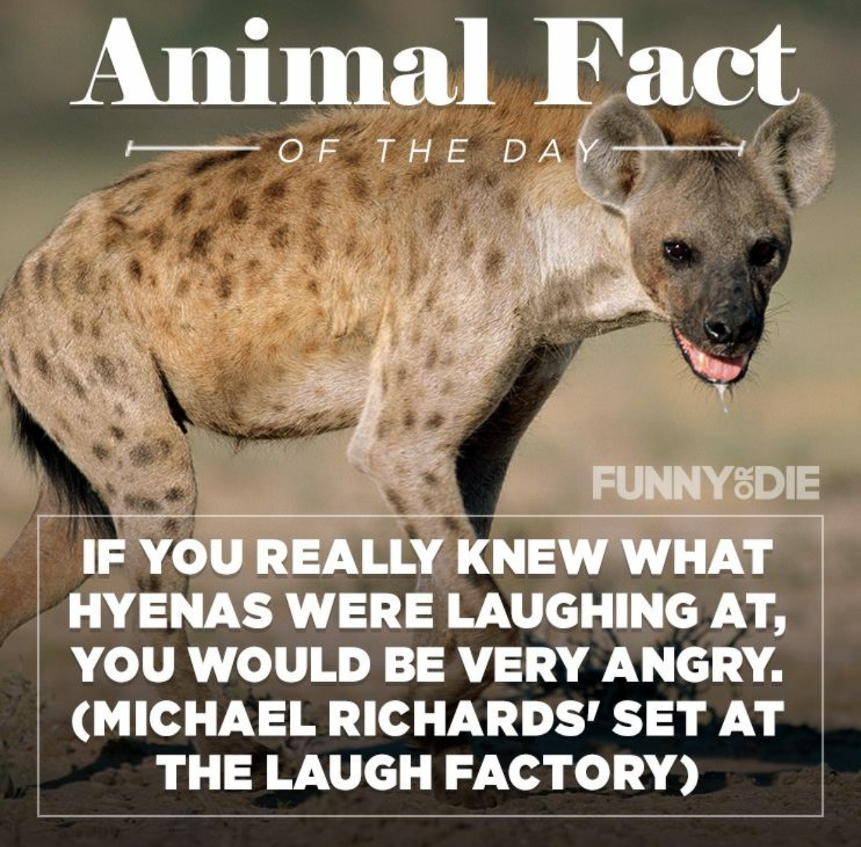 funny animal facts 10