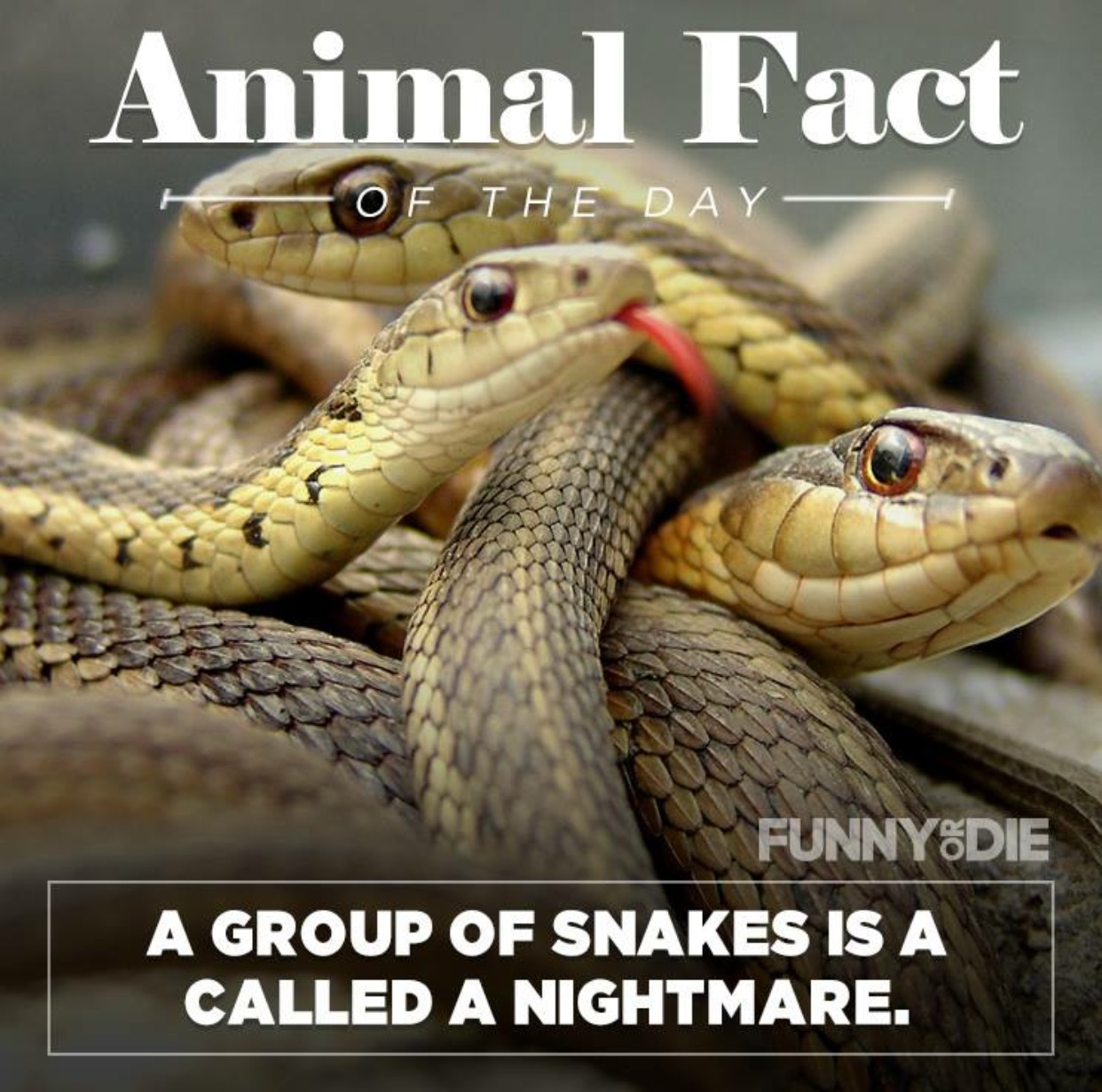 funny animal facts 12