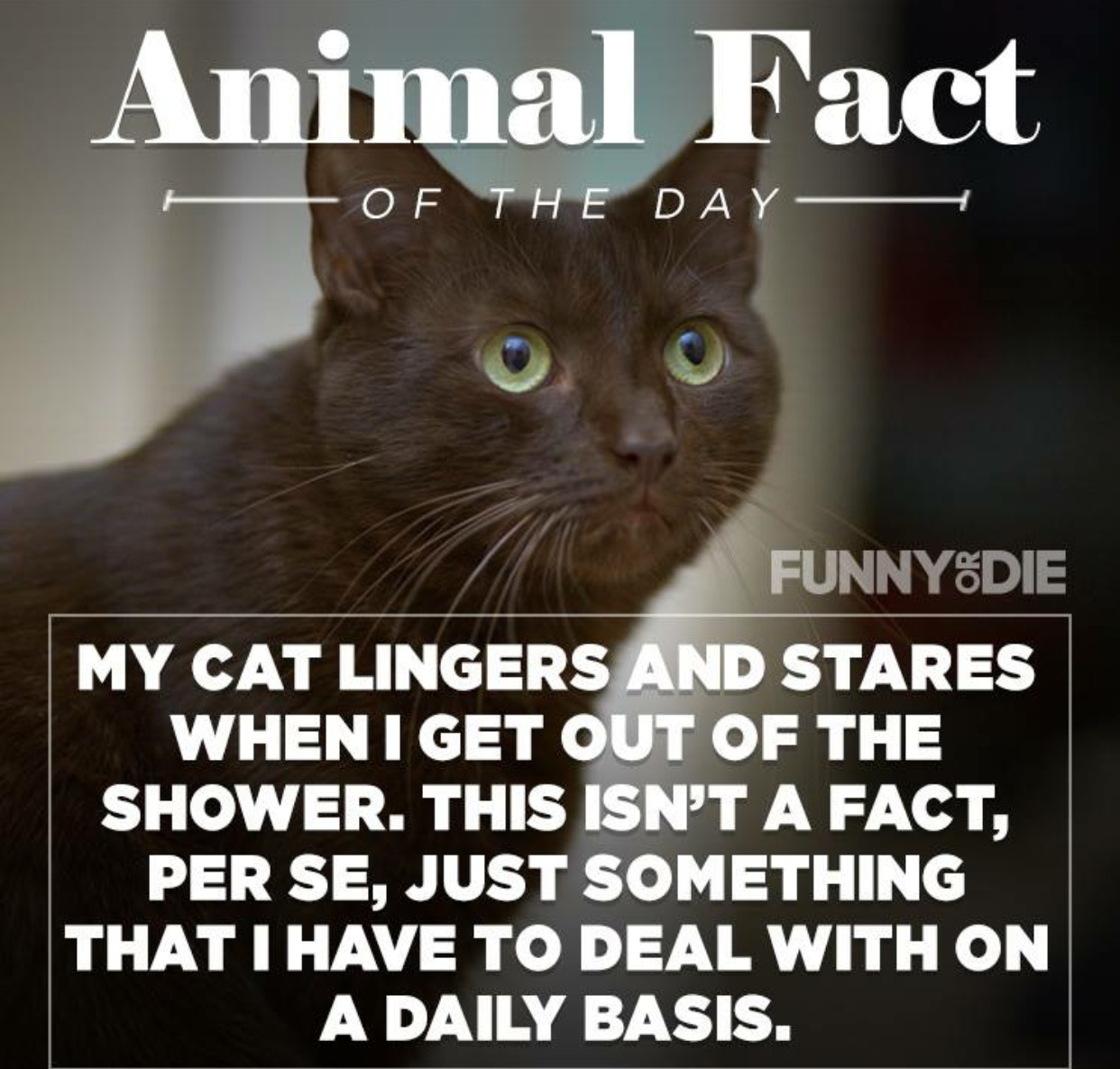 funny animal facts 14