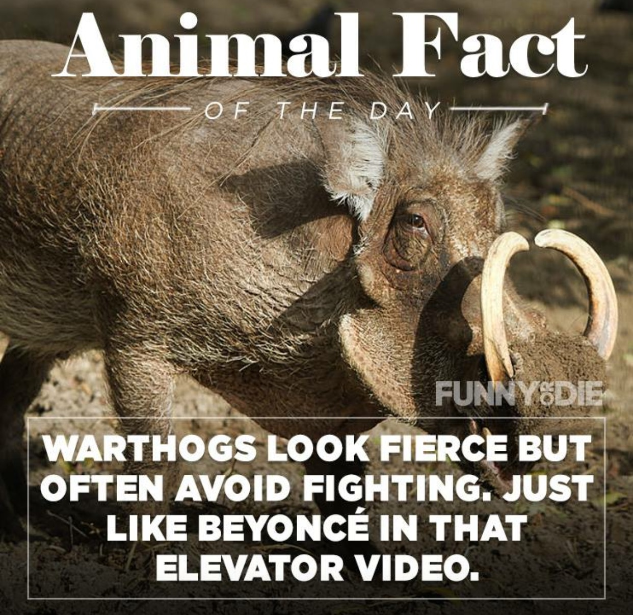 funny animal facts 8