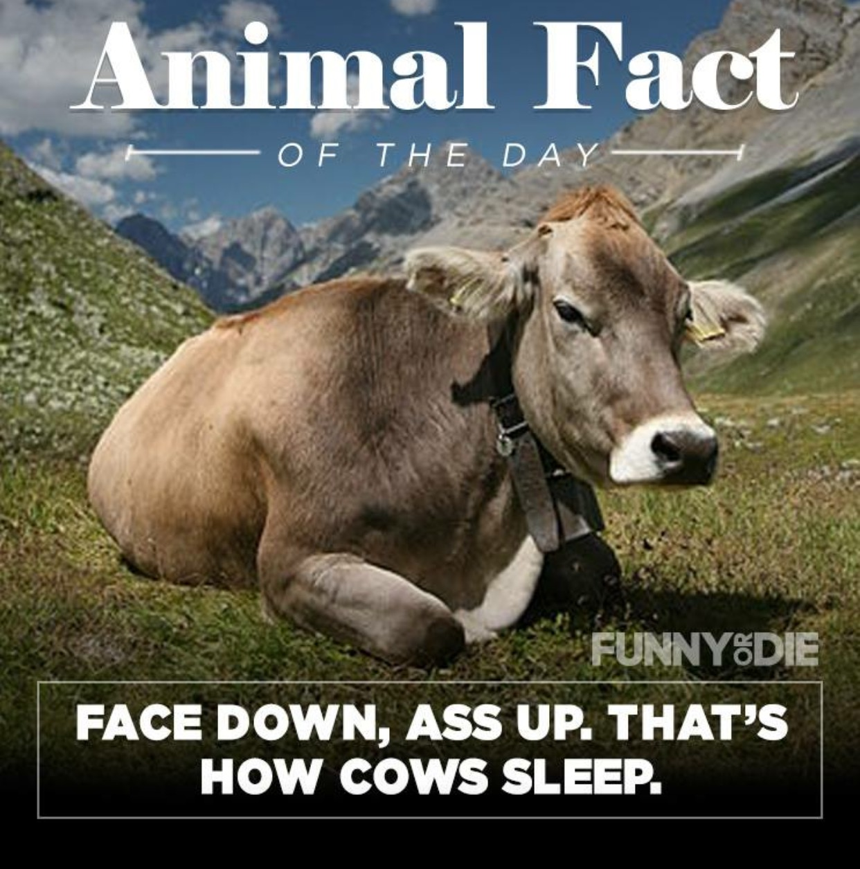 funny animal facts 9