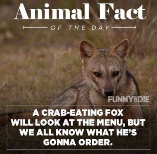 funny animal facts 7