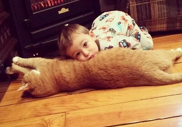 Larry the cat 2