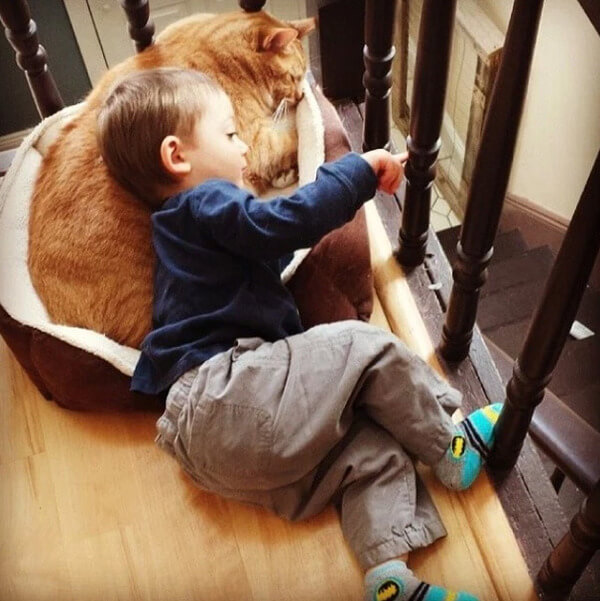 Lary the cat 7