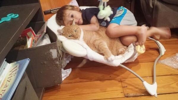 Larry the cat 3