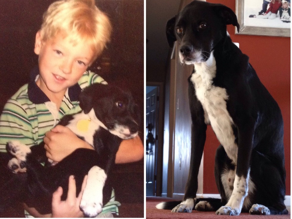 First And Last Photos Of Pets 10