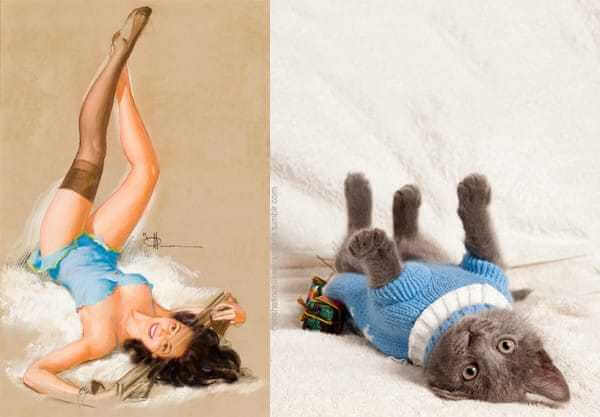 Cats that look like pin-up girls 1