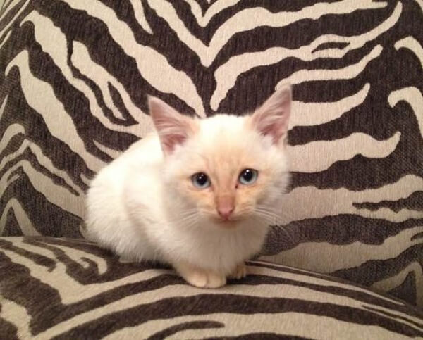 frozen kitten rescued 8