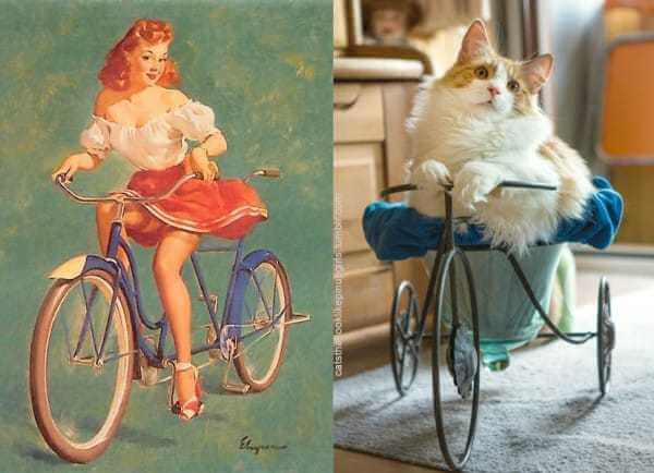 Cats that look like pin-up girls 11