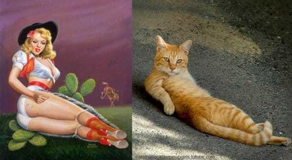 Cats that look like pin-up girls 13