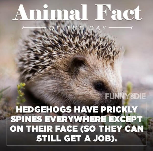 funny animal facts 4