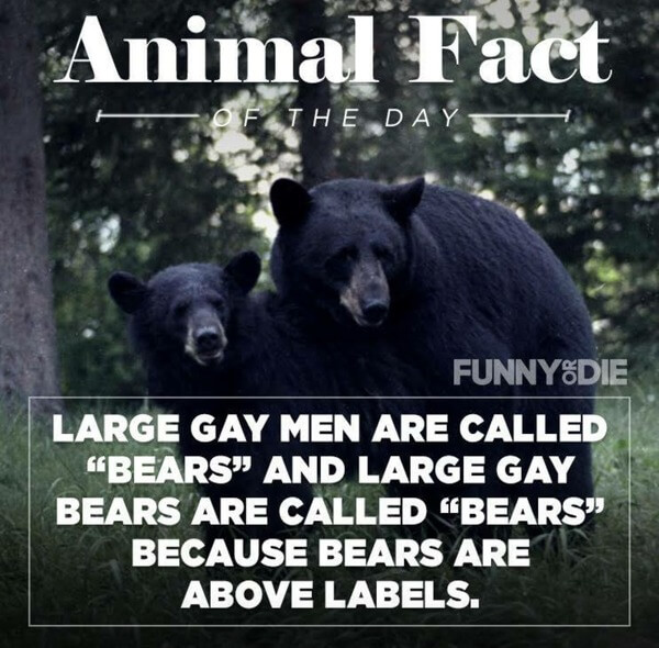 funny animal facts 5