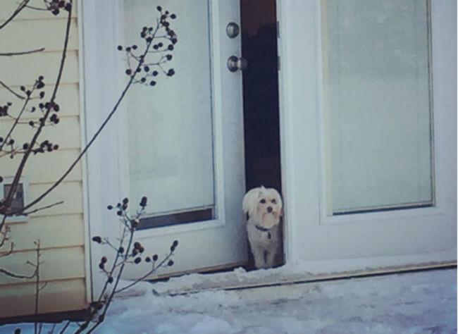 Pup win Blizzard 13