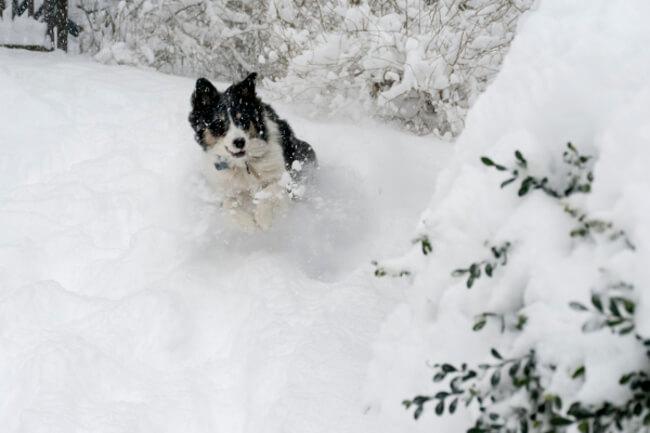 Pup win Blizzard 17