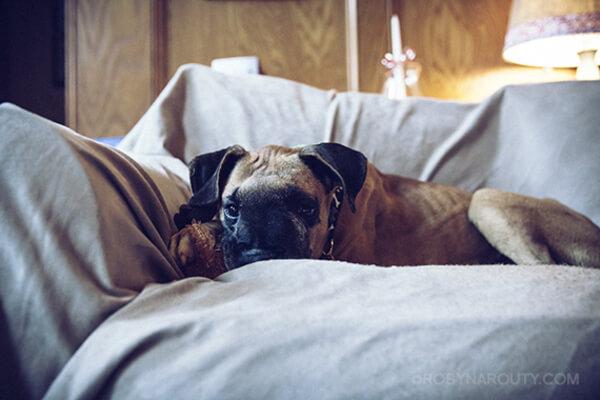 shelter dog 9