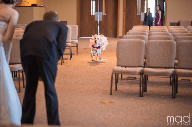 Bride And Her Service Dog 3