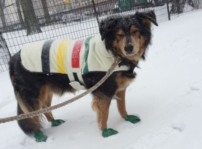 Pup win Blizzard 14
