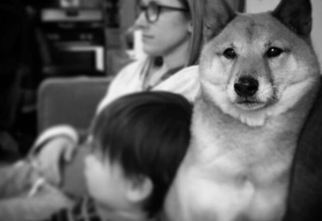 Pup win Blizzard 10