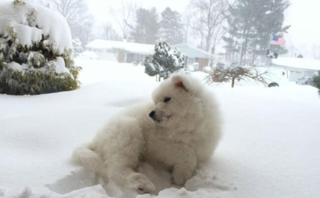Pup win Blizzard 11