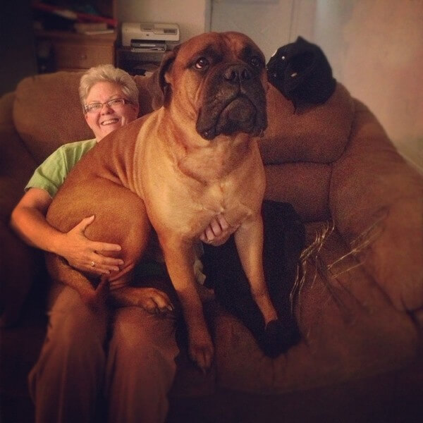 Enormous Dogs 3