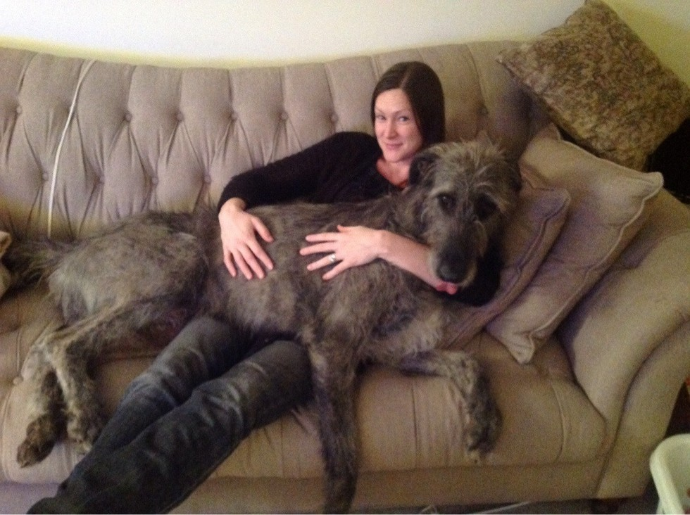 Enormous Dogs 10