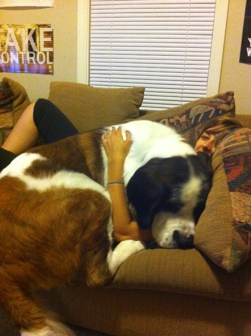 Enormous Dogs 12
