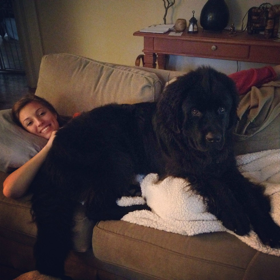 Enormous Dogs 2
