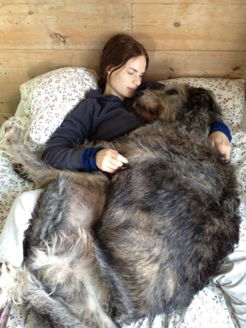 Enormous Dog 4