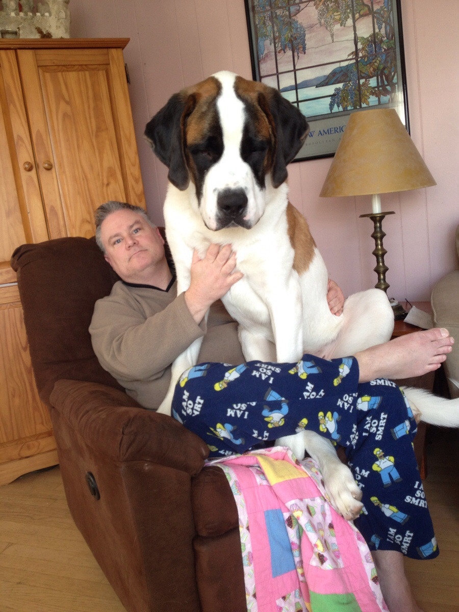Enormous Dog 6