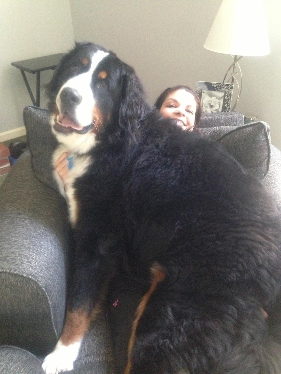 Enormous Dog 7