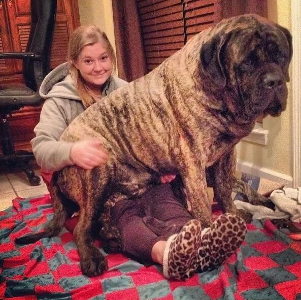 Enormous Dog 9