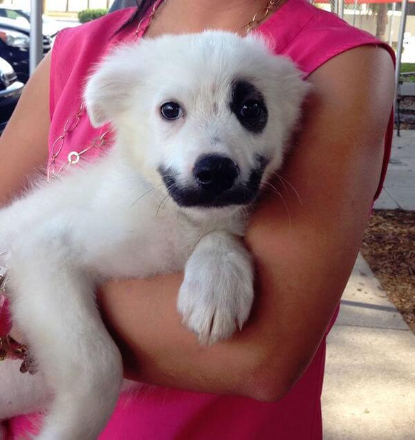Mix Breed Puppy With Black Markings