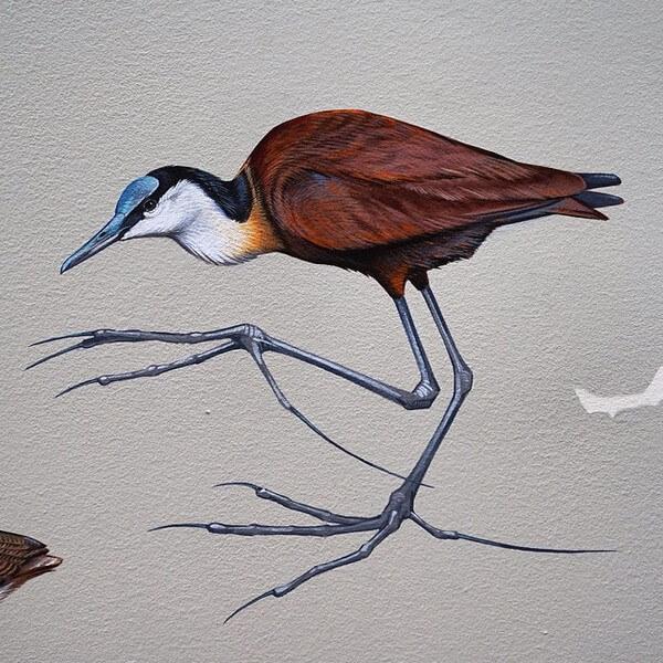 birds painting 11