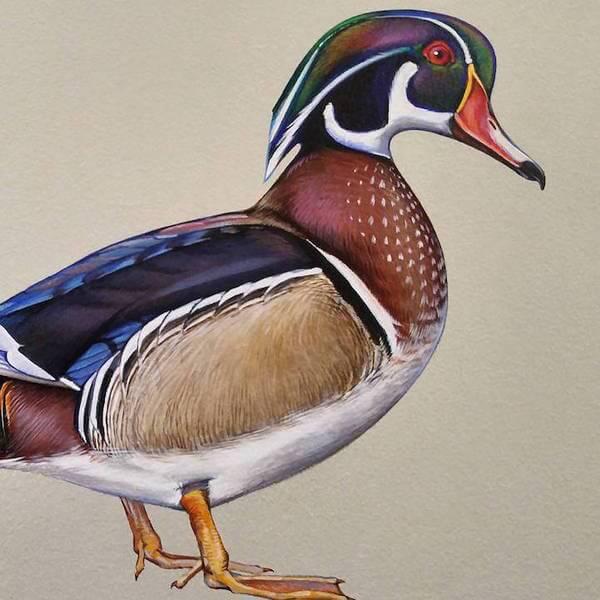 birds painting 12