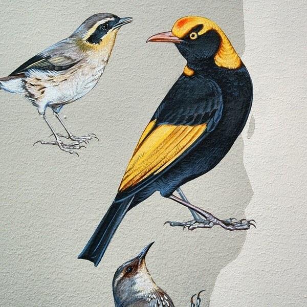 birds painting 15